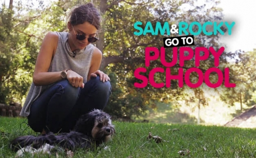 Sam & Rocky Start Puppy School And It's Almost Too Cute To Handle
